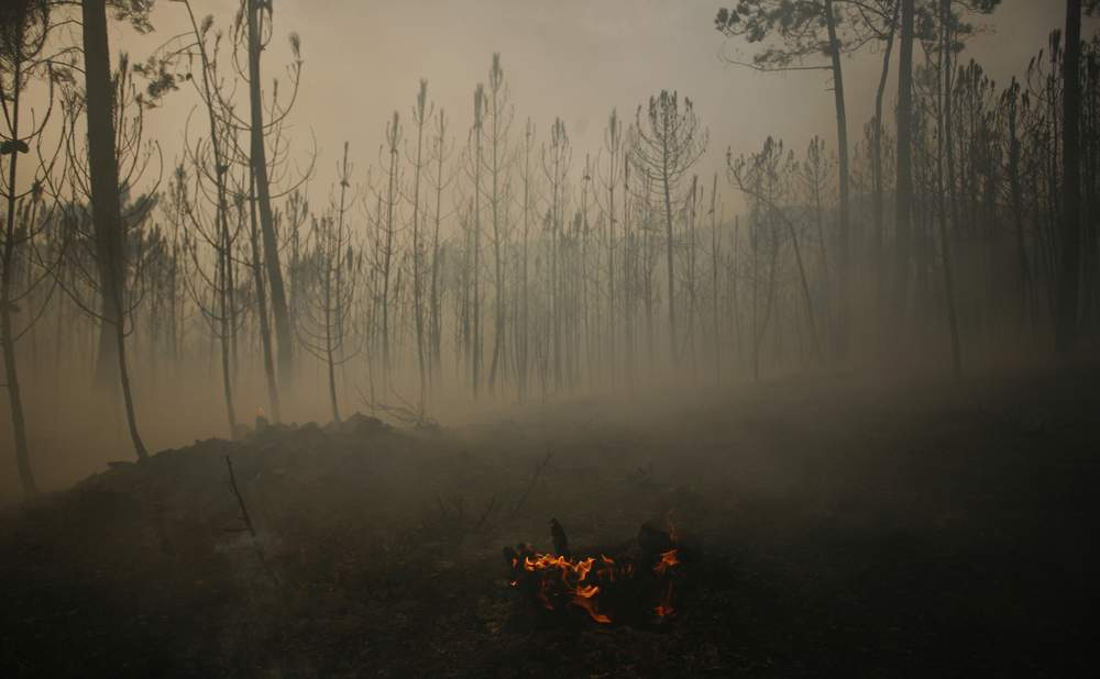 A burned forest is seen near Bouca, close to Sao Pedro do Sul, Portugal, August 9, 2010, after temperatures rose up to 40 degrees Celsius (104 degrees Fahrenheit) in several areas in the country. REUTERS\/Rafael Marchante
