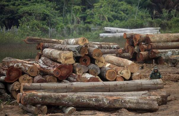 An agent of Brazil's environmental police IBAMA walks between piles of logs that were illegally extracted from the Alto Guama river Indian reservation in the Amazon rainforest, during a raid on sawmills, tree haulers, and loggers in Nova Esperanca do Piria, Para state, September 25, 2013. REUTERS/Ricardo Moraes