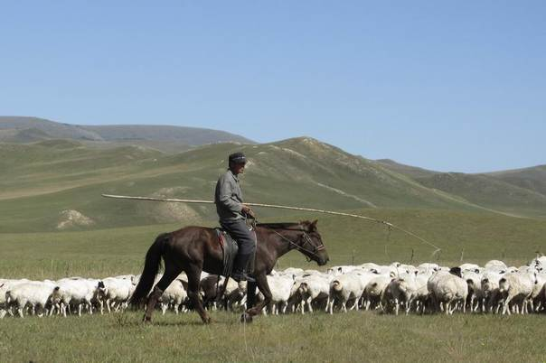 An ethnic Mongol herds sheep on the grasslands of Right Ujumchin Banner in the northern Chinese region of Inner Mongolia, Sept. 5, 2012. REUTERS/Ben Blanchard