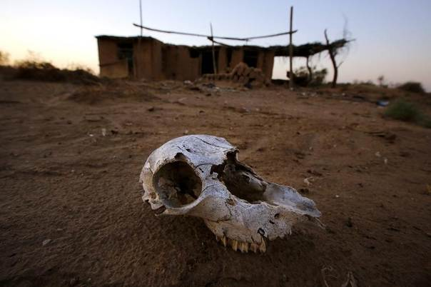 An animal skull lies on the ground at an abandoned farm, near the dried-up Shiyang river on the outskirts of Minqin town, in China's Gansu province, Sept. 20, 2013. REUTERS/Carlos Barria