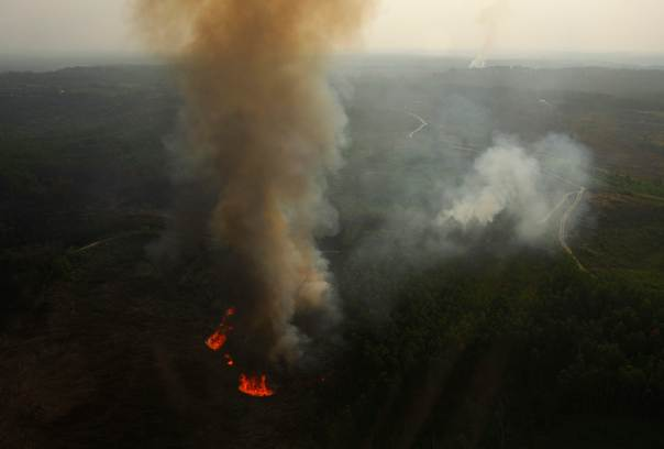 An aerial view of burning trees is seen during the haze in Indonesia's Riau province on June 28, 2013. REUTERS/Beawiharta