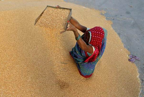 A woman winnows wheat crop at a wholesale grain market on the outskirts of the western Indian city of Ahmedabad, on May 7, 2013. REUTERS/Amit Dave