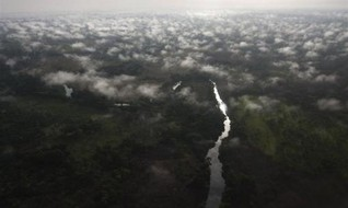 Congo Basin forests