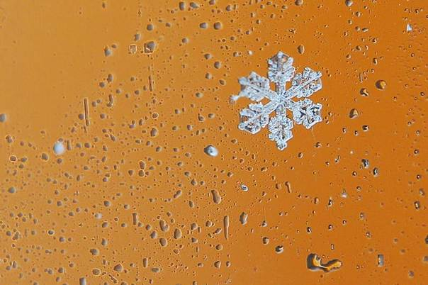 Snowflakes collect on a car window during a winter nor'easter snow storm in Waltham, Massachusetts, Jan. 2, 2014. REUTERS/Brian Snyder