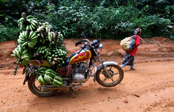 A motorbike taxi laden with locally-picked bananas is seen parked on the dirt track between the town of Mundemba and village of Fabe, Cameroon, on June 8, 2012. REUTERS/Emmanuel Braun