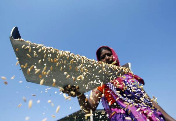 A worker throws rice through the air to remove dust at an agriculture product marketing committee yard at Sanand in the western Indian state of Gujarat, Jan. 7, 2014. REUTERS/Amit Dave