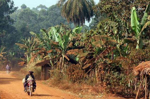 Such activities as urban forestry, sustainable forest management and agroforestry can not only mitigate the impacts of climate change, according to Denis Sonwa, a senior scientist with the Center for International Forestry Research, but they can also reduce the vulnerability of forest communities to climatic and non-climatic stresses — if they are planned properly. Picture Credit: Carsten ten Brink