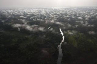 Gabon pledges to protect forests in regional drive to save Congo Basin