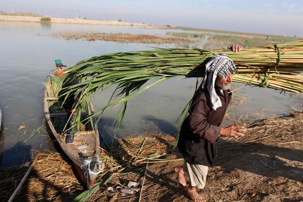 An Iraqi Marsh Arab collects reeds at the Chebayesh marsh in Nassiriya, 300 km (185 miles) southeast of Baghdad, on February 15, 2013. REUTERS/Thaier al-Sudani