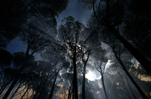 Trees are shrouded in smoke during a blaze on the slopes of Cape Town's Table Mountain on February 13, 2009. REUTERS/Mike Hutchings