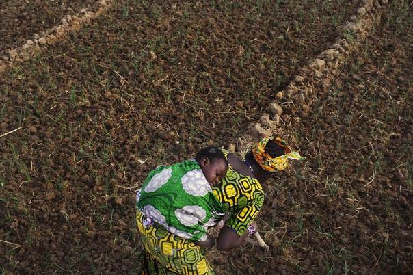 Farmer Bintou Samake plants beans while carrying her son Mahamadou on her back at a farm in Heremakono, Mali, Jan. 22, 2013. REUTERS/Joe Penney