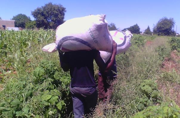 Boys carry sacks from a field in Sizinda suburb, Bulawayo, Zimbabwe. TRF/Madalitso Mwando