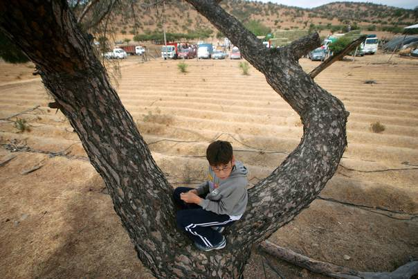 A boy rests on a tree in a farm which was dried up by drought, in the town of San Pedro, some 130 km (80 miles) southwest of Santiago, Chile, onFebruary 26, 2008. REUTERS/ Ivan Alvarado