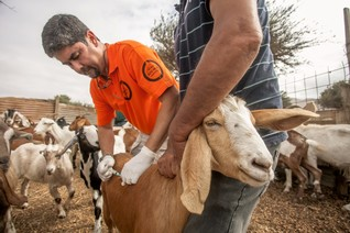 FEATURE-Noah's Ark: Animal protection in disasters a lifeline for rural families
