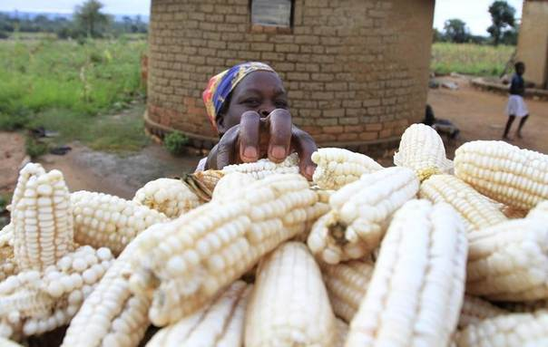 Martha Mafa, a subsistence farmer, stacks her crop of maize in Chivi, about 378km (235 miles) south-east of Zimbabwe's capital Harare, April 1, 2012. REUTERS/Philimon Bulawayo