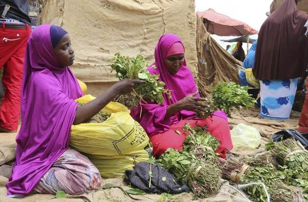 A woman and her daughter arrange branches of khat into small bundles in Mogadishu August 9, 2014. REUTERS/Feisal Omar