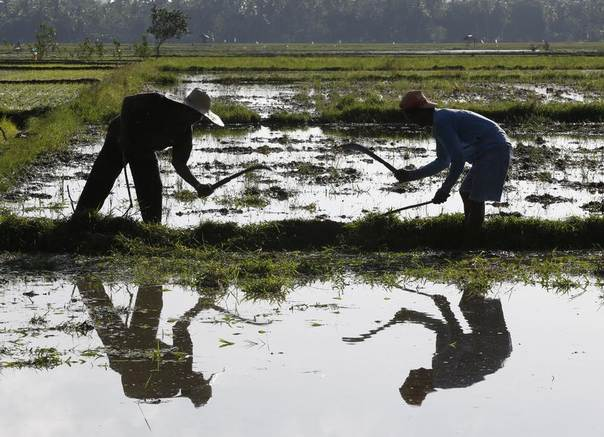Farmers till the soil at a rice paddy as they prepare to plant rice seedlings in Gloria, Oriental Mindoro in central Philippines, Nov. 28, 2013. REUTERS/Erik De Castro