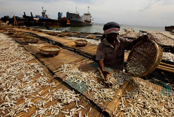 A worker lays fish on a mat for drying during dry fish processing at Cilincing beach in North Jakarta on June 5, 2013. REUTERS/Beawiharta