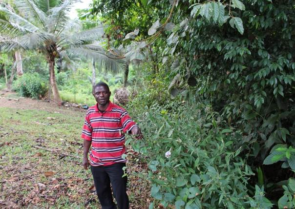 Local community representative, Matthew T Walley, stands amid trees in Liberia's River Cess County. FERN/Mark Olden