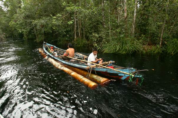Illegal loggers remove timber along a river in a forest south of Sampit in Indonesia's Central Kalimantan province on November 13, 2010. REUTERS/Yusuf Ahmad