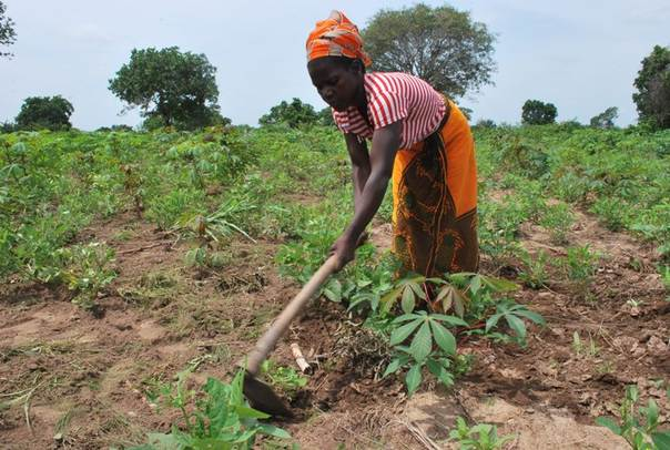 Muahera Antonia works in her fields in Sinhanhe, in Northern Mozambique's Nampula province. CARE/Emma Ljungkvist