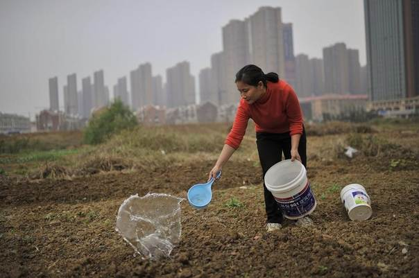 A new urban dweller, who recently moved into the residential compound in the background, plants vegetables in an open area, in Hefei, Anhui province, Oct. 19, 2013. REUTERS/Stringer