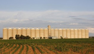 EXCLUSIVE-S. Africa considers strategic grain reserve as possible El Nino looms - minister
