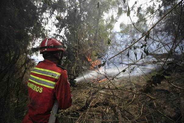A firefighter douses flames in a forest hit by a fire in Cota, near Bogota, January 12, 2013. REUTERS/John Vizcaino