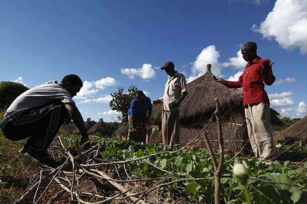 Farmer Silverio Hachipola (3rd L) shows his crops to visitors at the  village of Munyona, close to the town of Chikuni in the south of Zambia, April 18, 2012. REUTERS/Darrin Zammit Lupi