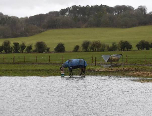 A horse stands in a flooded field in Hambleden, southern England, Feb. 12, 2014. REUTERS/Eddie Keogh