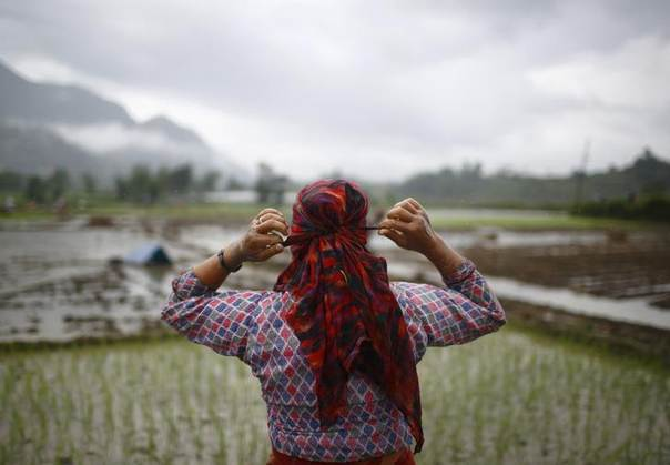 In this 2013 file photo, a farmer ties a scarf around her head while planting rice saplings in the paddy field in Khokana, Lalitpur REUTERS/Navesh Chitrakar
