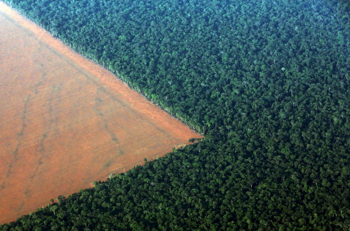 deforestation in the amazon rainforest Direct drivers of deforestation in amazon countries cattle ranching cattle ranching is the leading cause of deforestation in the amazon rainforest in brazil, this has been the case since at least the 1970s: government figures attributed 38 percent of deforestation from 1966-1975 to large-scale cattle ranching.