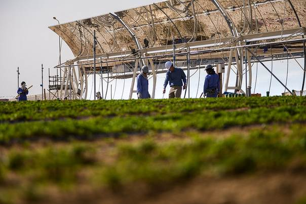 The Sahara Forest Project pilot facility in Qatar is making the desert green (2012). PHOTO/The Sahara Forest Project