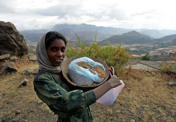 An Ethiopian girl sells barley seeds in the mountainous region of northern Tigray province on November 23, 2004. REUTERS/Radu Sigheti RSS/CRB