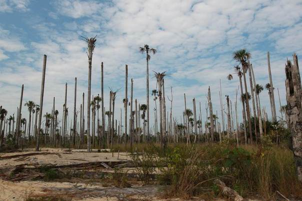 A general view of a deforested area near an illegal gold mine at Puerto Luz in the Amazon region of Madre de Dios, September 11, 2012. REUTERS/Miguel Bellido/El Comercio