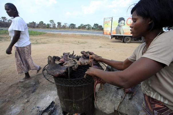 A woman dries bushmeat near a road of the Yamoussoukro highway, Ivory Coast, March 29, 2014. Experts who have studied the Ebola virus from its discovery in 1976 in Democratic Republic of Congo, then Zaire, say its suspected origin - what they call the reservoir host - is forest bats. Links have also been made to the carcasses of freshly slaughtered animals consumed as bushmeat. REUTERS/Thierry Gouegnon