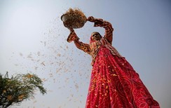 A woman winnows rice in a field on the outskirts of Ahmedabad, India