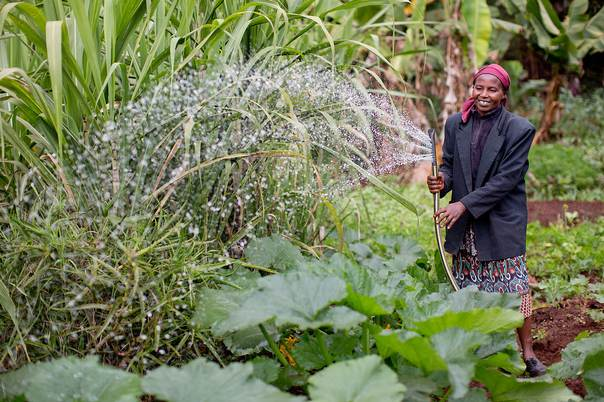 A woman waters her crops using electric motor irrigation pump for small-scale farming in Kenya. Photo credit: DIV at USAID on Flickr