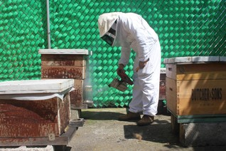 FEATURE-Boosting bees could sweeten chance of a greener Mexico City