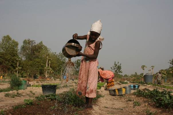 A young girl waters her family garden in Mali. ICRISAT/Alina Paul Bossuet