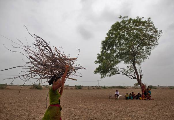 A woman carries firewood as others rest under a tree after they migrated due to a water shortage on the outskirts of Sami town in the western Indian state of Gujarat, on August 6, 2012. REUTERS/Ahmad Masood