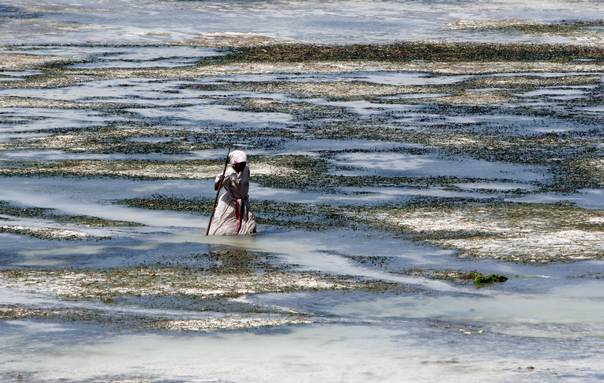 A woman on the island of Zanzibar  carries collected seaweed on May 26, 2009. REUTERS/Peter Andrews