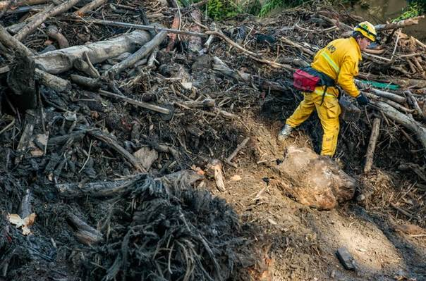 A rescue worker scours through fallen trees for missing