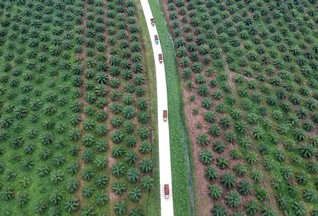 Indonesia tells some Jakarta supermarkets to remove 'palm oil-free' products