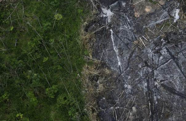 An area of the Amazon rainforest which has been slashed and burned stands next to a section of virgin forest, as seen from a police helicopter during the
