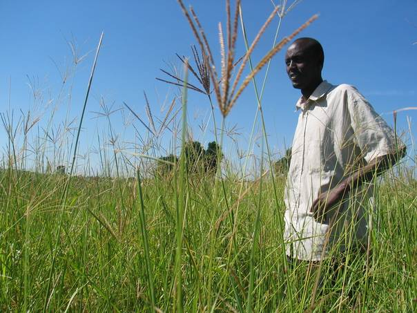 Leonard Leina, who lives in the Rift Valley's Transmara area, stands amid his plot of boma rhode grass, growing as fodder for his livestock. THOMSON REUTERS FOUNDATION/Pius Sawa