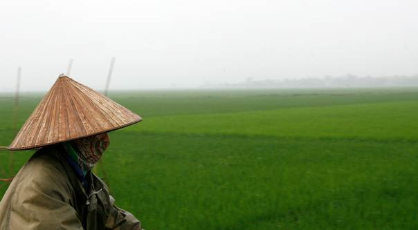 A woman wearing a conical hat goes past a rice paddy field in Yen Phu village, 20 km (12.5 miles) south of Hanoi, on April 14, 2010. REUTERS/Kham