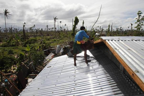 Ravaged coconut trees are seen as workers stand on the new corrugated iron roofing on the reconstructed house of Roberto Retanal in Palo, Leyte province, central Philippines December 20, 2013. REUTERS/Romeo Ranoco