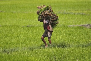 More calls to return idle land to farmers in India as conflicts rise