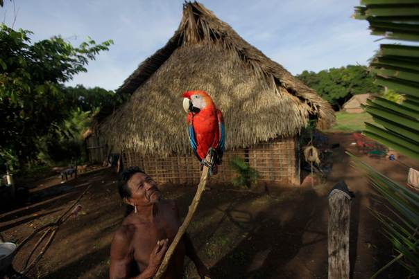 A man from Kayapo tribe observes an Arara in front of his house on the second day of a medical expedition in Kikretum community in Sao Felix, northern Brazil, on April 22, 2011. REUTERS/Ricardo Moraes